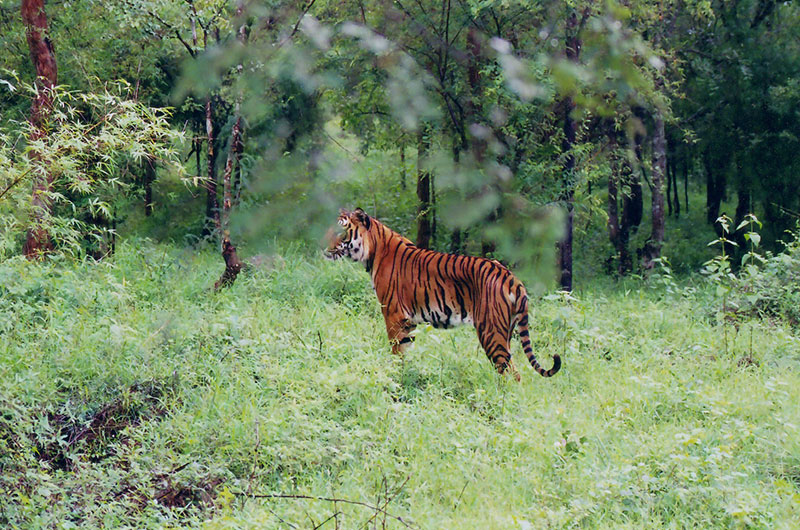 Guddadamane Homestay - Bhadra Wildlife Sanctuary